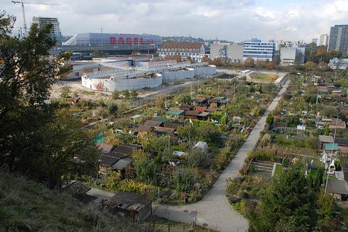 allotment gardens next to city