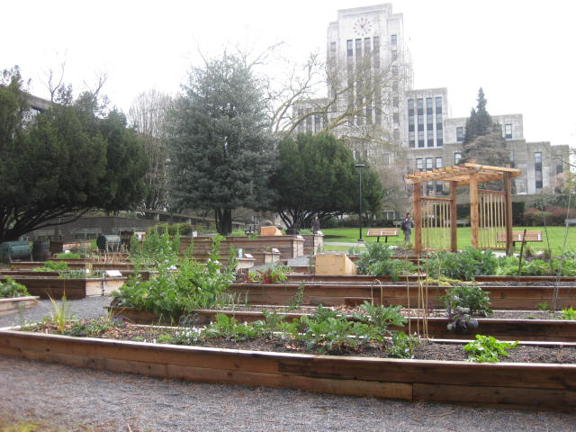 city hall community garden urban agriculture